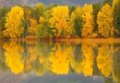 """""""Montana Fall""""    Fall colors and reflections over a small pond just outside Glacier National Park. Chip Phillips Photography"""