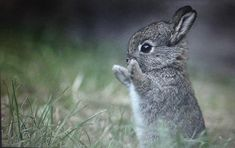 Cuki állatok Love Is Sweet, Cute Baby Animals, Animal Photography, Cute Babies, Rabbit, Funny Pictures, Bunny, Friday, Fanny Pics