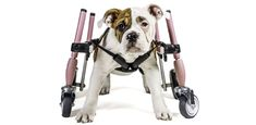Petcare on a budget- tips on reducing expenses related to caring for a special needs pet