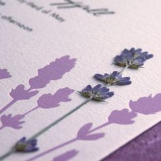 Lavender Field  pressed flower Letterpress by EdenInvitations