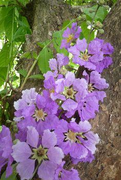 ARBORETUM: JUNIO flor de reina