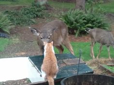 Tuffy and the deer