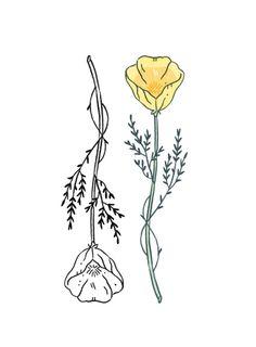 California poppy design for Calli