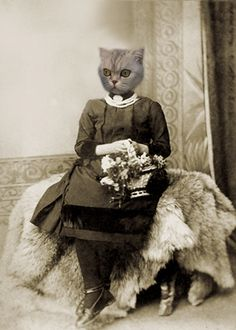 Regan 5x7 Vintage Cat Print Anthropomorphic by AnimalFancy