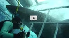 Great White Shark Rips Through A Shark Cage
