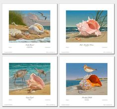 http://www.ebay.com/itm/The-Shell-Collection-Open-Edition-Giclee-Prints-by-Robert-B-Dance-/251868875431