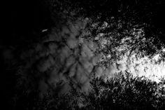 Autumn dreams by Sylvia Blok, via Behance