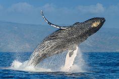 """Képtalálat a következőre: """"whales"""""""