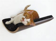 Curve Wall Mounted Pet Bed