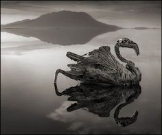 Lake Natron - If a body falls anywhere else it decomposes very quickly, but on the edge of the lake, it just gets encrusted in salt and stays forever. Wildlife photographer Nick Brandt used the corpses littering the Tanzanian lake shores as posed models for a haunting new series of photographs.