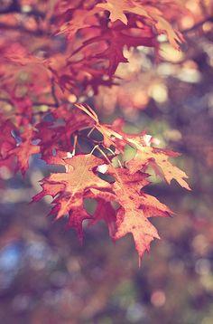 Cozy Autumn Memories