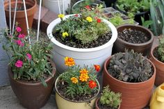 Reasons I Love Container Gardening #container #garden