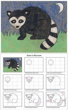 How to Draw a Raccoon (Art Projects for Kids) Classroom Art Projects, Art Classroom, Projects For Kids, Art Lessons For Kids, Art For Kids, Raccoon Art, Racoon, Kindergarten Art, Drawing Lessons