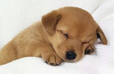 A power nap can boost your productivity -