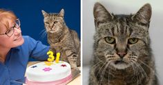 Worlds Oldest Cat Is 31 And Still Has Many Lives LeftMore Cute...