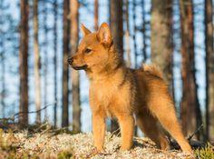 Rare, Super Cute Dog Breeds | PetBreeds