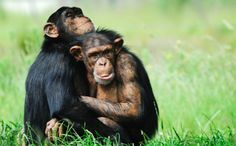 Charla Nash Speaks Out to End the Primates as Pets Industry / PLEASE SIGN & SHARE !!!