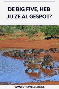 Heb jij de Big Five al gespot: olifant, leeuw, buffel, luipaard en neushoorn. Ik heb in Zuid-Afrika en Namibië 4 dieren van deze lijst gespot, een luipaard heb ik nog niet gezien (helaas). Wil je meer lezen over de Big Five, kijk dan op mijn website. #bigfive #zuidafrika #namibie #olifant #leeuw #neushoorn #buffel #luipaard