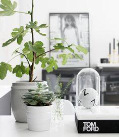 plantas/moda/decoración. www.sunshinecoastinteriordesign.com.au