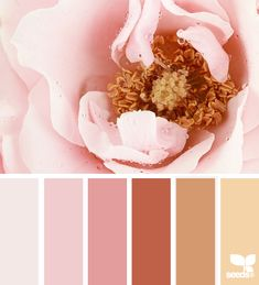 Flora Tones: Pastel Pink, Blush Pink, English Rose Pink, Rusty Copper, Dusty Gold, Latte Tan