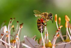 La Familia de la Apicultura - The Beekeeping of Family: Colección de visitas a distintas flores - Collection of visits to different flowers.