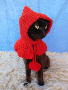 gifts for cats Pet Halloween Costumes, Pet Costumes, Cat Lover Gifts, Cat Gifts, Gifts For Cats, Cat Lovers, Colorful Animals, Cute Animals, Cat Sweaters