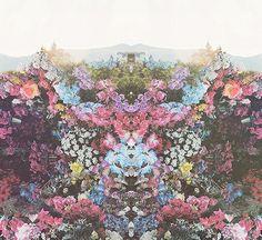 Flowers... <3