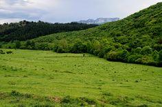 Valle de Mena Verde que te quiero verde. Recorriendo la calzada entre Arceo e Irus Merindades