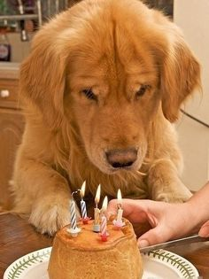 Happy Birthday! Can I have cake now huh huh?