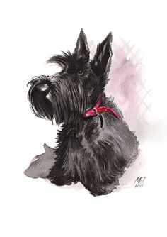 Scottie, scottish terrier