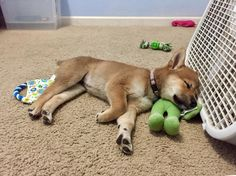 Using her toy as a pillow.