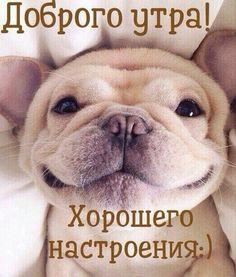 Beautiful Day, Good Morning, French Bulldog, Happy Birthday, Motivation, Cards, Pictures, Animals, Summer