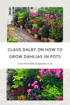 Claus Dalby shows you how to add his distinctive Danish style to your pots. Create a container garden full of colour! #middlesizedgarden Growing Dahlias, Growing Plants, Grasses For Pots, Garden Ideas Uk, Low Maintenance Garden Design, Garden Privacy, Herbaceous Border, Border Plants, Danish Style
