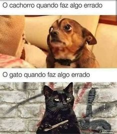 Animals And Pets, Funny Animals, Cute Animals, Sao Memes, Funny Memes, Cool Pets, Cute Dogs, Otaku Meme, Love Pet