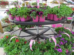 WEEKLY SALE May 12-19 ~ 6 pack Wave Petunias ~ reg. $9.00  NOW $7.00 Petunias, Waves, Retail, Spring, Plants, Pictures, Photos, Photo Illustration, Planters