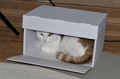Material Conservación para archivos y ¿gatos? | Neschen
