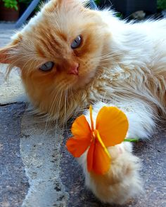 For you 🌺 ... from my Merlin 😍 - Meggie von Ritter - Google+