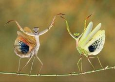 happily dancing insects