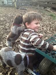 Little boys and little dogs.....miss it