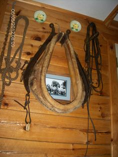 Collected this horse tack from a yard sale and decorated a wall in my log home with it.