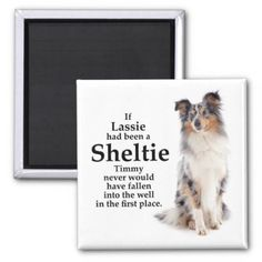 Timmy's Blue Merle Sheltie Magnet - animal gift ideas animals and pets diy customize