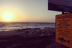 #theycallmeG #followforfollow #likeforlike #followback #followbackteam #followbackalways #california #cali #centralcoast #805 #beautiful #ocean #pacificocean #surfbeach #lompoc #cityoflompoc #snowyplovers #sharkattack #sunset #sky #clouds #goodnight by angryg