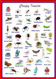 Creepy Insects Pictionary **fully editable - ESL worksheet by Sharin Raj List Of Insects, Types Of Insects, Insects Names, Vocabulary Worksheets, Science And Nature, Cheers, Pest Control, Preschool, English