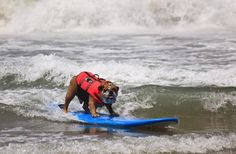 Funny-Surfing-Dogs-On-The-Wave-17