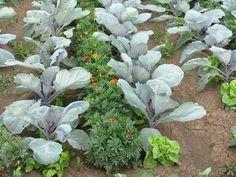 Herb Garden, Vegetable Garden, Home And Garden, Companion Planting, Go Outside, Garden Projects, Garden Ideas, Gardening Tips, Beautiful Flowers