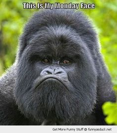 funny-grumpy-angry-gorrila-monkey-sad-monday-face-pics.jpg (464×530)