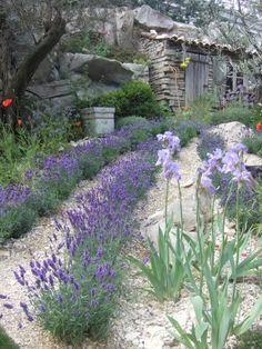 L'Occitane Provencal Garden designed by James Towillis - Chelsea Flower Show 2010