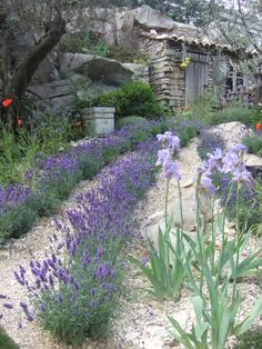 L'Occitane Provencal Garden designed by James Towillis - Chelsea Flower Show 2010