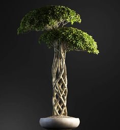 Stunning Bonsai Plant Design Ideas For Garden 03 One of the ancient plants that are used for decoration in both the indoors and outdoors are bonsai plants. Bonsai Soil, Bonsai Plants, Bonsai Garden, Garden Plants, House Plants, Bonsai Trees, Bonsai Tree Types, Indoor Bonsai Tree, Bonsai Making