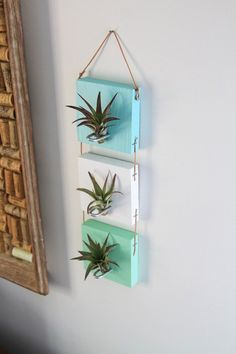 Air Plant Wall Hanging // Cool Living Art by GemsOfT .- Air Pflanze Wand hängen / / Cool lebendige Kunst von GemsOfTheSoil Air Plant Wall Hanging // Cool Vivid Art by GemsOfTheSoil - Hanging Air Plants, Hanging Plant Wall, Hanging Baskets, Indoor Plants, Mini Terrarium, Air Plant Terrarium, Air Plant Display, Plant Decor, Decoration Plante
